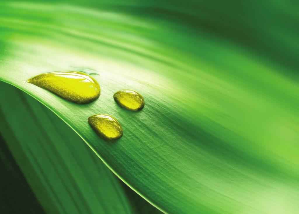 OLVEA Vegetable Oils - Goutte d'huile et fond vert