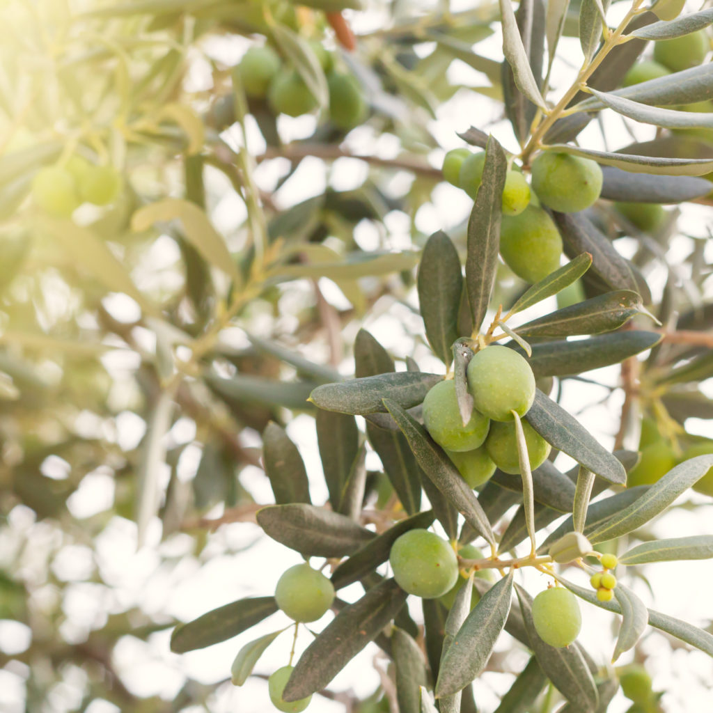 OLVEA-fournisseur-huile-et-beurres-végétaux-bio-afrique