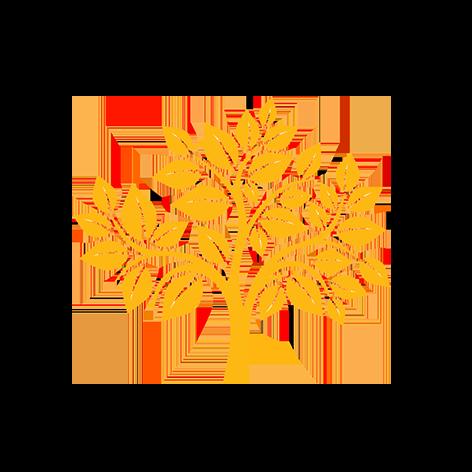 OLVEA - Production d'huile d'argan - Récolte argan