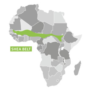OLVEA - Shea butter producer - Shea Belt